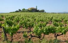 Masos, vinyes i sorpreses a les viles del Baix Penedès