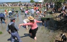 Festa de la Plantada de l'Arròs de Deltebre