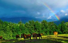 Cavalls de Puigcerd�