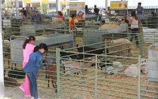 Mostra de bestiar a la Fira de Sant Isidre de Solsona