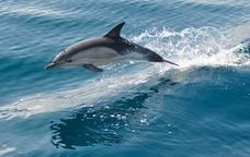 Dofins a la vista!