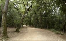 Una de les pistes forestals de Collserola