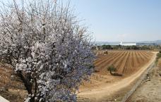 Horitzons de vinyes verdes als afores del Vendrell