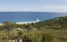 Pinedes i romaní a la platja del Torn