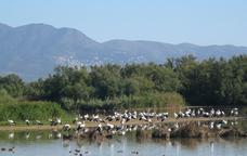 Birding: descoberta ornitològica als parcs naturals de Catalunya