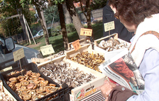 Festa del Bolet i les Herbes Remeieres de Castellter�ol