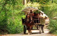 Un carruatge pels camins de la Fageda d'en Jord�