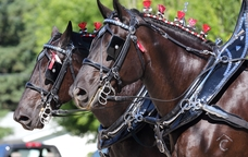 Cavalls a punt per a la cercavila