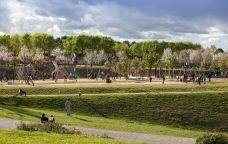El parc Central de Sant Cugat