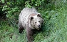 Observació de fauna salvatge a la Vall d'Aran
