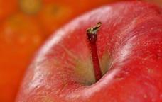 La poma és la fruita protagonista del Baix Ter