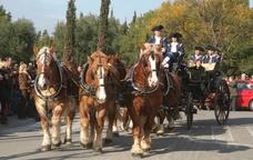 L'Associació dels Tres Tombs de Vilanova i la Geltrú organitza els Tres Tombs de la ciutat