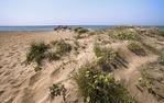 Les dunes de la platja del Prat de Llobregat