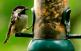 Passejada ornitològica i taller de...