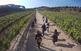 Passejada nòrdica entre les vinyes d'Alella