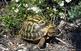Visita al centre de Recuperació d'Amfibis i Rèptils de Catalunya