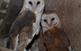 Visita al centre de fauna salvatge de la...