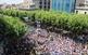 Diada Castellera de les Santes de Mataró