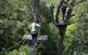 Circuits dalt dels arbres al Bosc Vertical