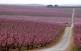 Els arbres fruiters són un esclat de flors a la primavera