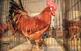 43a Fira Avícola de la Raça Prat