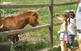 Cavalls a la granja de Can Bosc de Breda