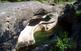 La riera de Merlès, natura en equilibri
