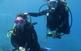 L'univers submarí de les illes Medes