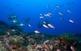 Activitats aquàtiques a les illes Medes