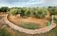 Visita guiada a les oliveres mil·lenàries d'Ulldecona