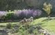 Les plantes aromàtiques al Parc de les Olors