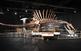Exposició 'Spinosaurus, el gegant perdut' del Cretaci al Museu Blau