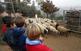 Descobrint l'ofici de pastor a Sant Boi de Llobregat