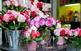 III Ruta de les Tapes de Roses i del Vi DO Empordà