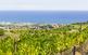 Diumenges de Vins. Entre el mar i la muntanya