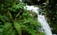 El bosc i les llegendes del Montseny