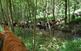 Excursió a cavall pels boscos del Montseny
