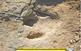Visites al jaciment de petjades de dinosaure de Basturs