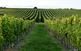 L'art de la vinya